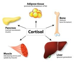 Learn How to Become Vascular - Lower Cortisol Levels